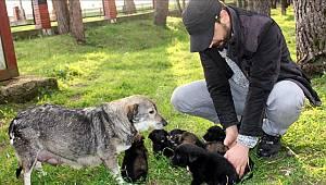 Annesiz kalan köpekler için 'süt seferi' yapıyor
