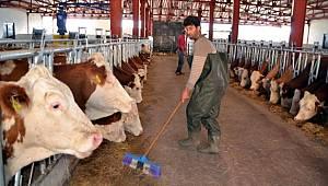 Hayvancılık işletmelerine tarımsal elektrik tarifesi