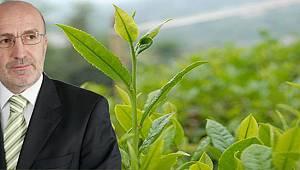 Uzun'dan Çay Üreticisine Budama Yapın Çağrısı