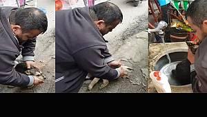 Köpeği Kalp Masajı ve Suni Teneffüs ile Hayata Döndürdü