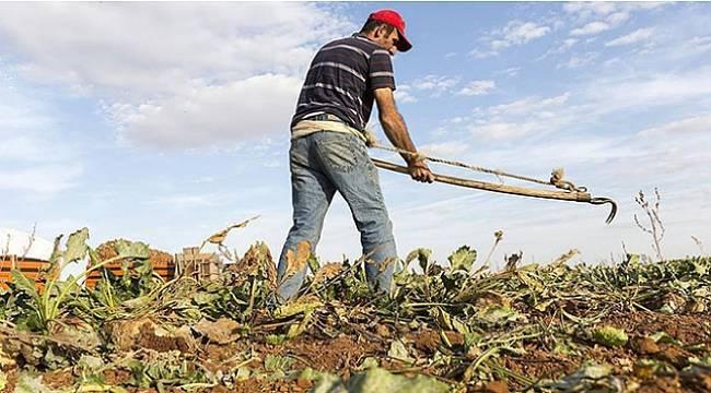 Türkiye, tarımsal hasılada Avrupa'da birincisi