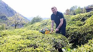 Okan Buruk Rize'de Çay Bahçesinde Çay Topladı