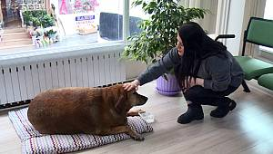 Sokak Köpeği