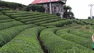 Çay Bahçesi Çay Bahçesi Olalı Böyle İlgi Görmedi
