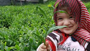 2020 Yılı Yaş Çay Sezonu Başladı. Çay Üreticisi 4 Günlük Sokağa Çıkma Kısıtlamasından Muaf Tutulmak İstiyor