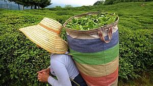 Çay Üreticileri İçin Seyahat İzin Belgesi Başvuruları Başladı