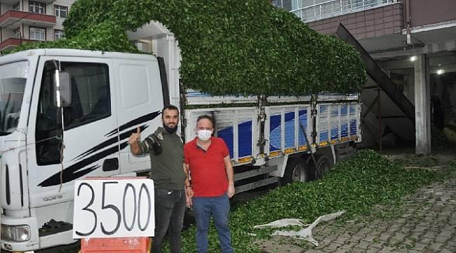 Rize'de Özel Sektör Yaş Çay Alımlarını Sürdürüyor