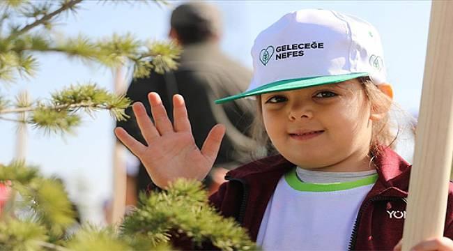 Rize'de Bu Yıl Sonuna Kadar 244 Bin Fidan Dikilecek
